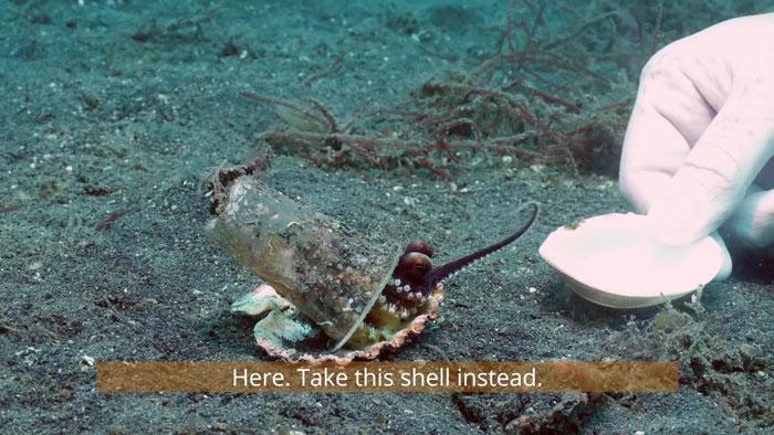 diver-helps-octopus-in-cup-2