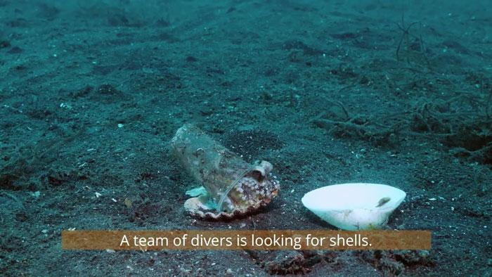 diver-helps-octopus-in-cup-3