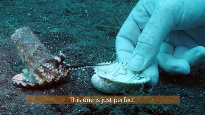 diver-helps-octopus-in-cup-4