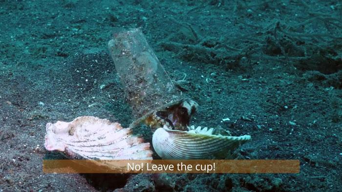diver-helps-octopus-in-cup-5