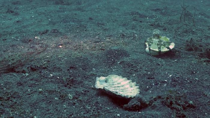 diver-helps-octopus-in-cup-6