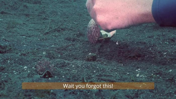 diver-helps-octopus-in-cup-7