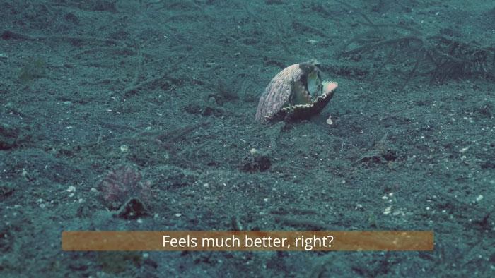 diver-helps-octopus-in-cup-8
