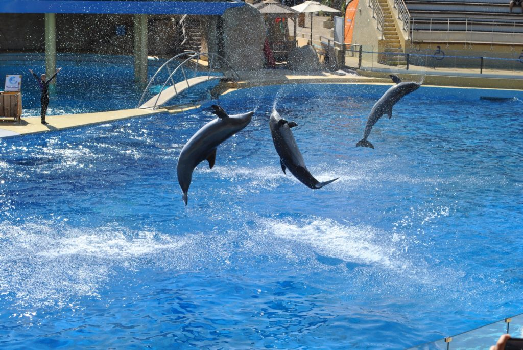 Dolphins in pool water parks jobs