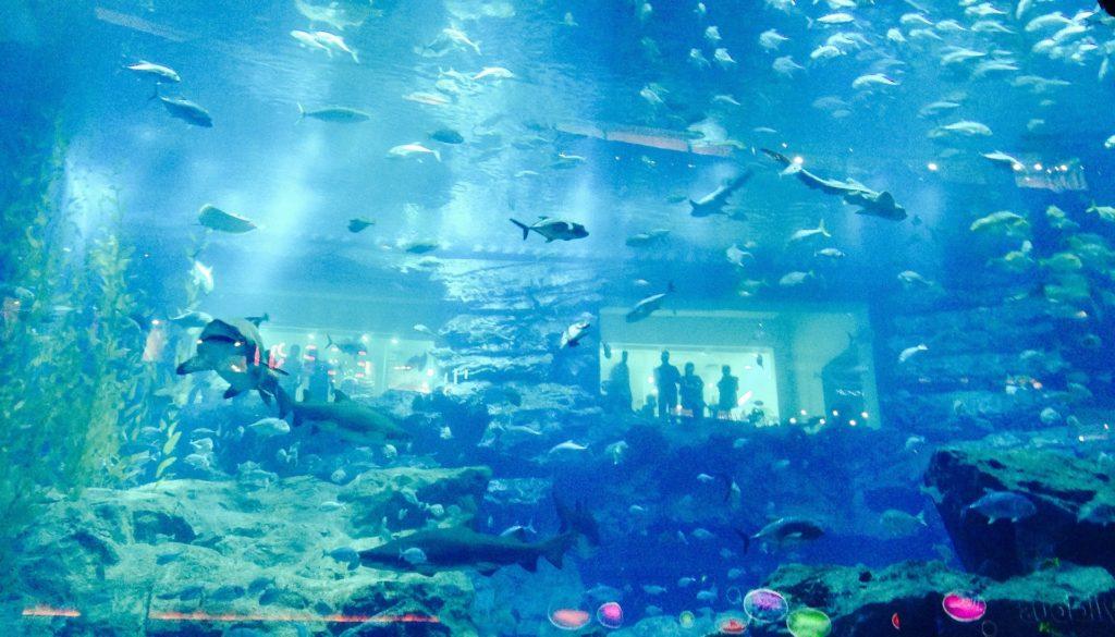Dubai Aquarium water park jobs