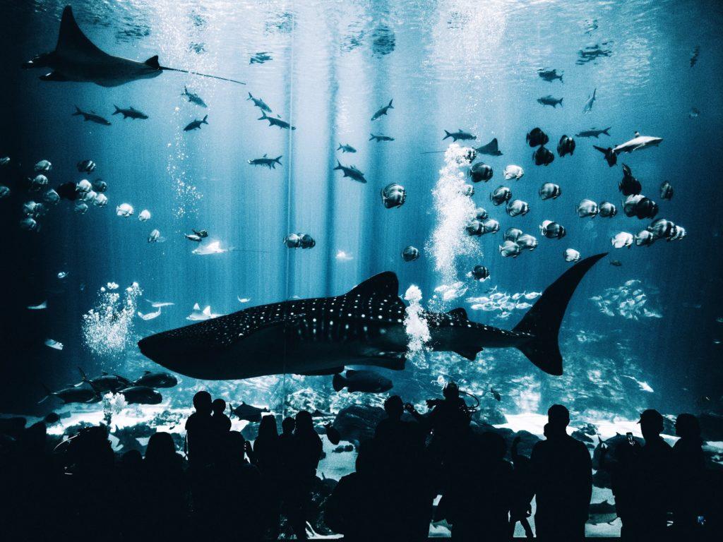 Aquarium Georgia Whale Shark water parks jobs