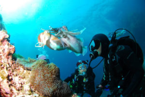 Why is scuba diving interesting to so many people?