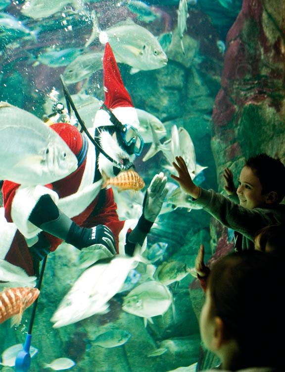 Aquarium show diver