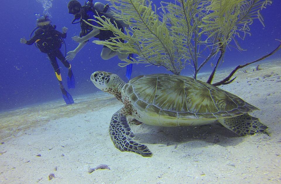 turtle-underwater