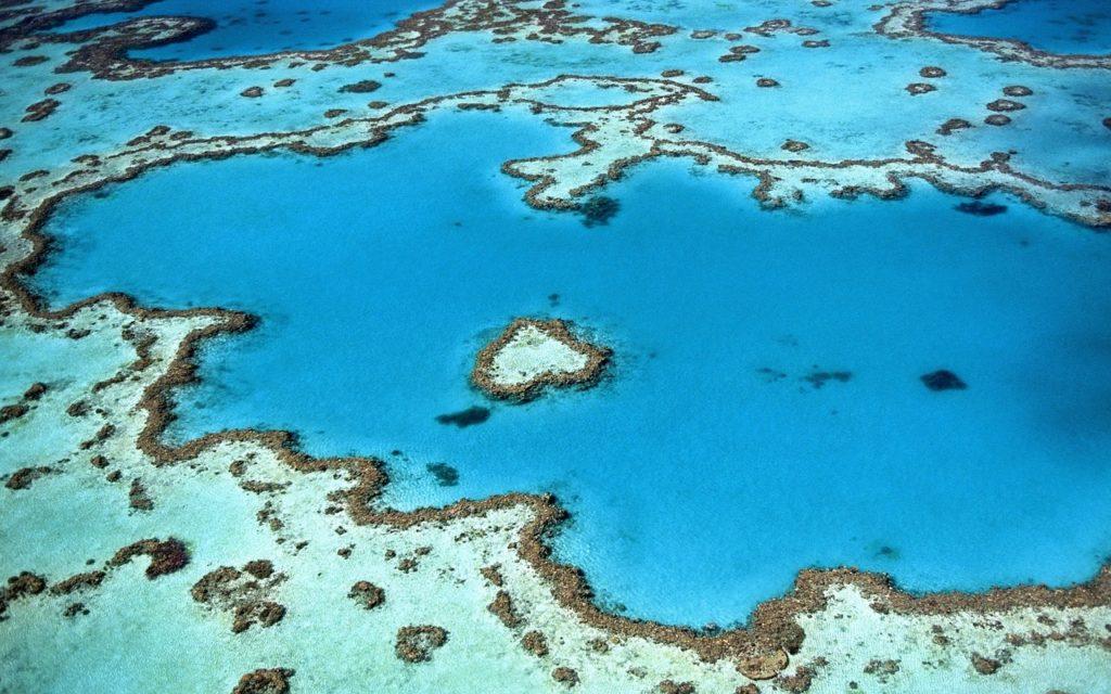 heart shape reef