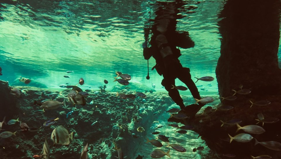 12 questions you might be afraid to ask about scuba diving