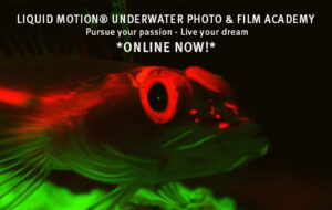 An amazing gift for those who love Underwater Imaging!