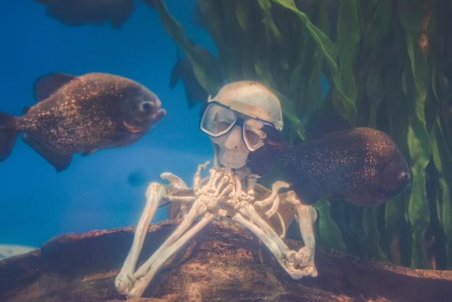Diving stories skeleton