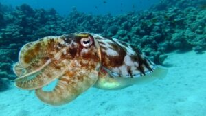Cuttlefish visiting a 3D cinema