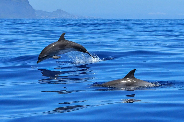 Do dolphins have a personality