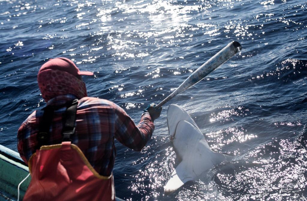 shark fins trade